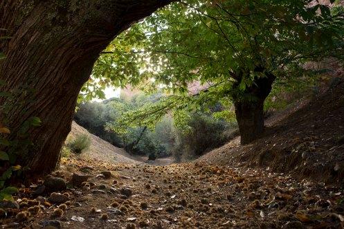 arbore3